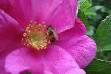 Endometriose und Homöopathie | News bei Beate Ruttkowski